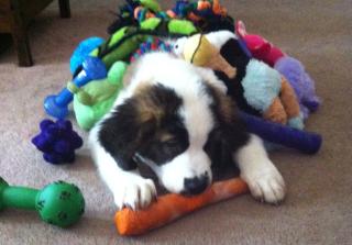 Nala and toys